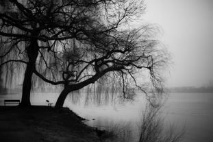 Hamburg Alster - Tree and empty bench in winter