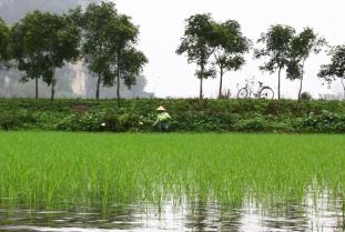 Ninh Binh 3